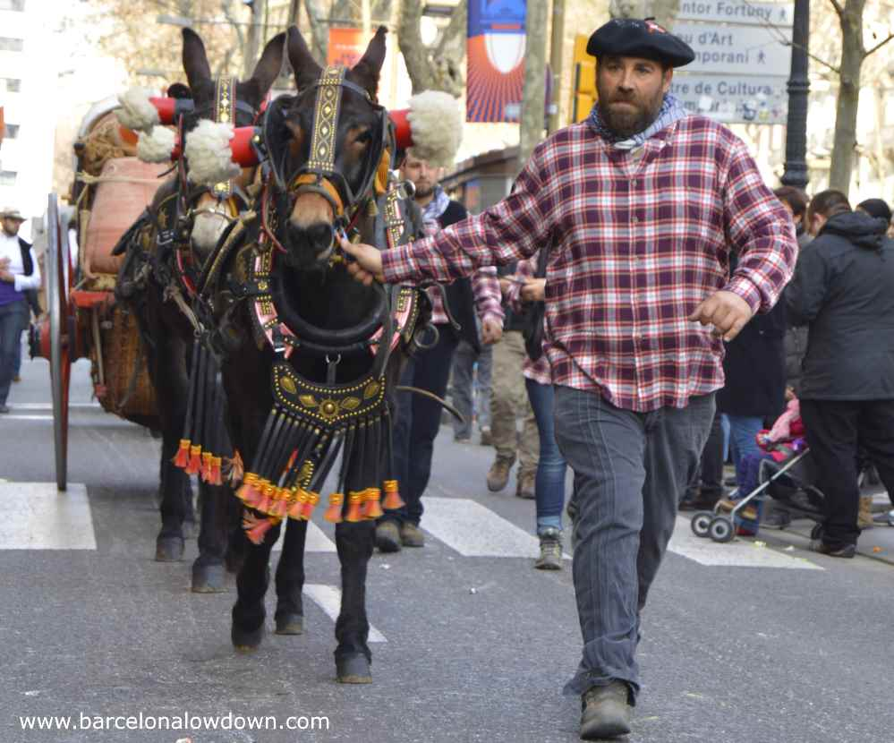 Man in Basque costume leading mules in the tres tombs parade Barcelona