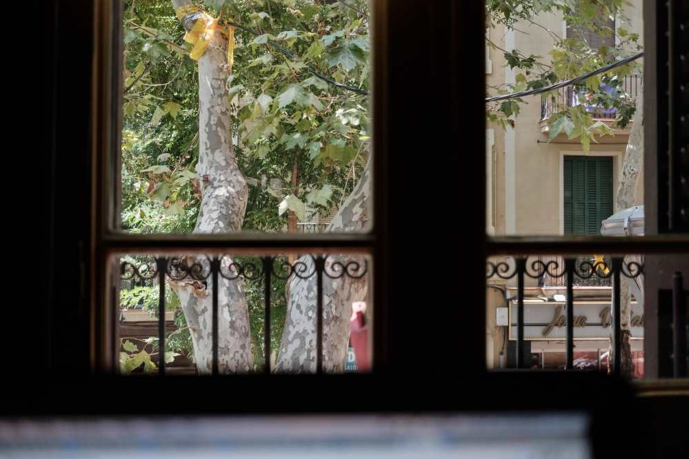 View out of the window of a first floor flat in Barcelona, there is a tree and some other buildings outside